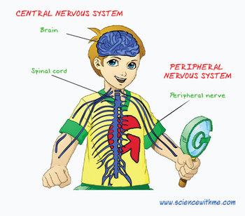 Nervous System Smartboard