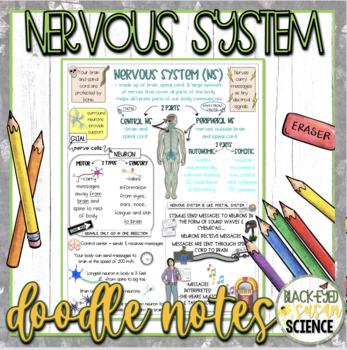 Nervous System Squiggle Sheets & Understanding Checkpoint MS-LS1-3