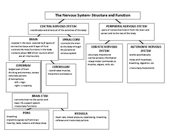 Nervous System:Structure and Function Chart