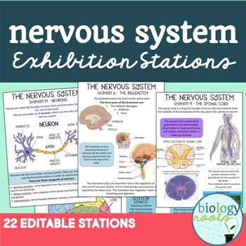 Nervous System Exhibition Stations