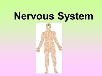 Nervous System Teacher and Student Fill-in Notes