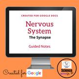 Nervous System The Synapse Digital Resource: On GOOGLE DOC