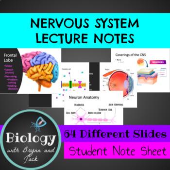 Nervous System Unit Notes