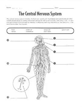 Nervous System Unit Work/Packet