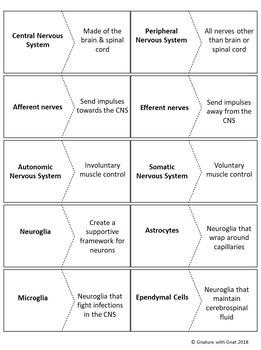Nervous System: Vocab Matching Activity
