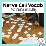 Nervous System Activity: Matching Vocabulary
