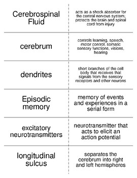 Nervous System Vocabulary Flash Cards for Physiology Students