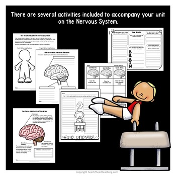 Human Body Systems: Nervous System Activities & Vocabulary Posters