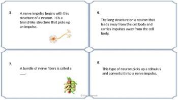 Nervous System Vocabulaty Task Cards NO PREP & FULLY EDITABLE