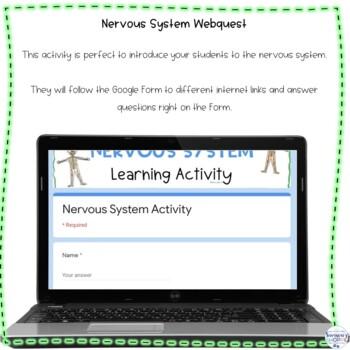 Nervous System Web Search Internet Activity