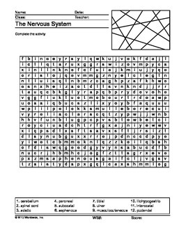 Nervous System Word Search Printable
