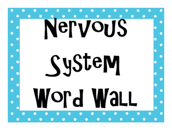 Nervous System Word Wall