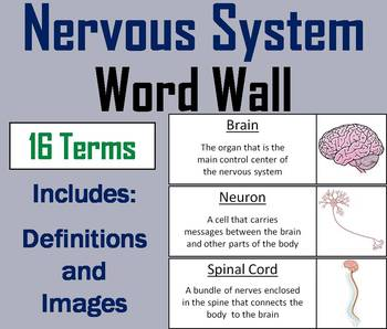 Nervous System Word Wall Cards