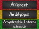 Nervous System Word Wall for High School Anatomy