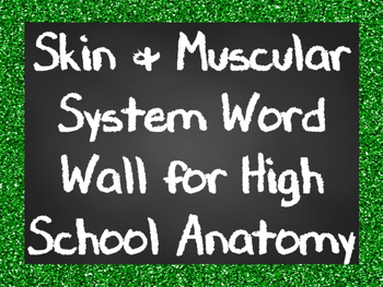 Skin and Muscular System Word Wall for High School Anatomy