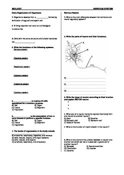 Nervous System Worksheet