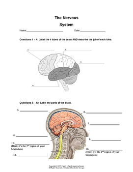 Nervous System Worksheet # 2 by Family 2 Family Learning Resources