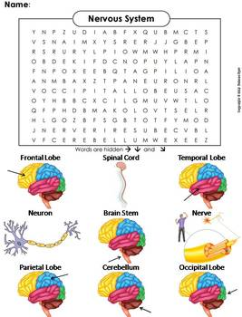 Human Body Systems Word Search: Nervous System Worksheet