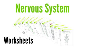 Nervous System Worksheets