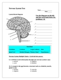 Nervous System and Excretory System Assessment and Key