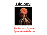 Nervous System power Point