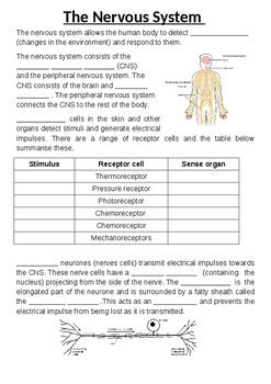 Nervous Sytem summary