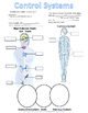 Nervous System and Endocrine System Note Catcher / Graphic Organizer