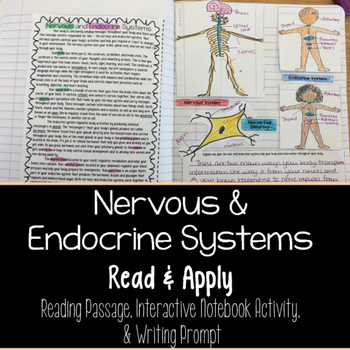 Nervous and Endocrine Systems Reading Comprehension Interactive Notebook