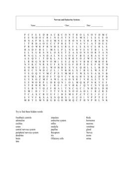 Nervous and Endocrine Systems Word Search Puzzle with key