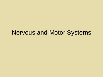 Nervous and Motor Systems Presentation