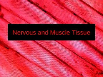 Nervous and Muscle Tissue