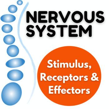 Nervous system - Stimulus, Receptors and Sense organs