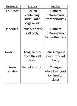 Neuron Matching