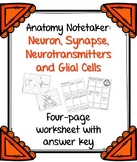 Neuron, Neurotransmitters, Synapse and Glial Cell Notetakers