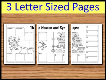 Neuron and Synapse - Big Foldable for Interactive Notebooks or Binders