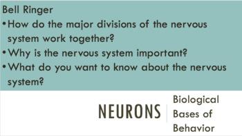Neurons & Neural Transmission