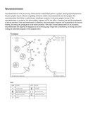 Neurotransmission: Synapse Schematic and Sequencing Chart