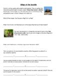 Neutralisation Bee & Wasp Stings Worksheet