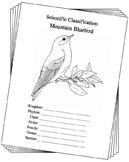 Nevada State Bird Notebooking Set (Mountain Bluebird)