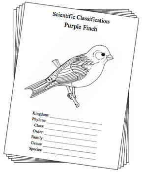 New Hampshire State Bird Notebooking Set (Purple Finch)