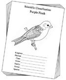 New Hampshire State Bird Notebooking Set (Purple Finch)