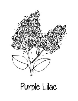 New Hampshire State Coloring Pages