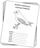 New Jersey State Bird Notebooking Set (American Goldfinch)