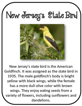 New Jersey State History Unit.  U.S. State History.  34 Pages!!
