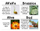 New Plants Science Vocabulary Cards (FOSS Module New Plants)
