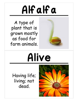 New Plants Science Vocabulary Cards (FOSS Module New Plants) Large