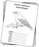 New York State Bird Notebooking Set (Eastern Bluebird)