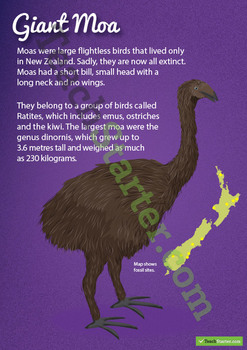 New Zealand Animal Posters
