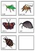 Minibeasts: New Zealand Invertebrates - flies or crawls