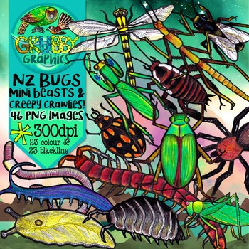 New Zealand Native Bugs Clip Art {Insects, Spiders & Invertebrates}